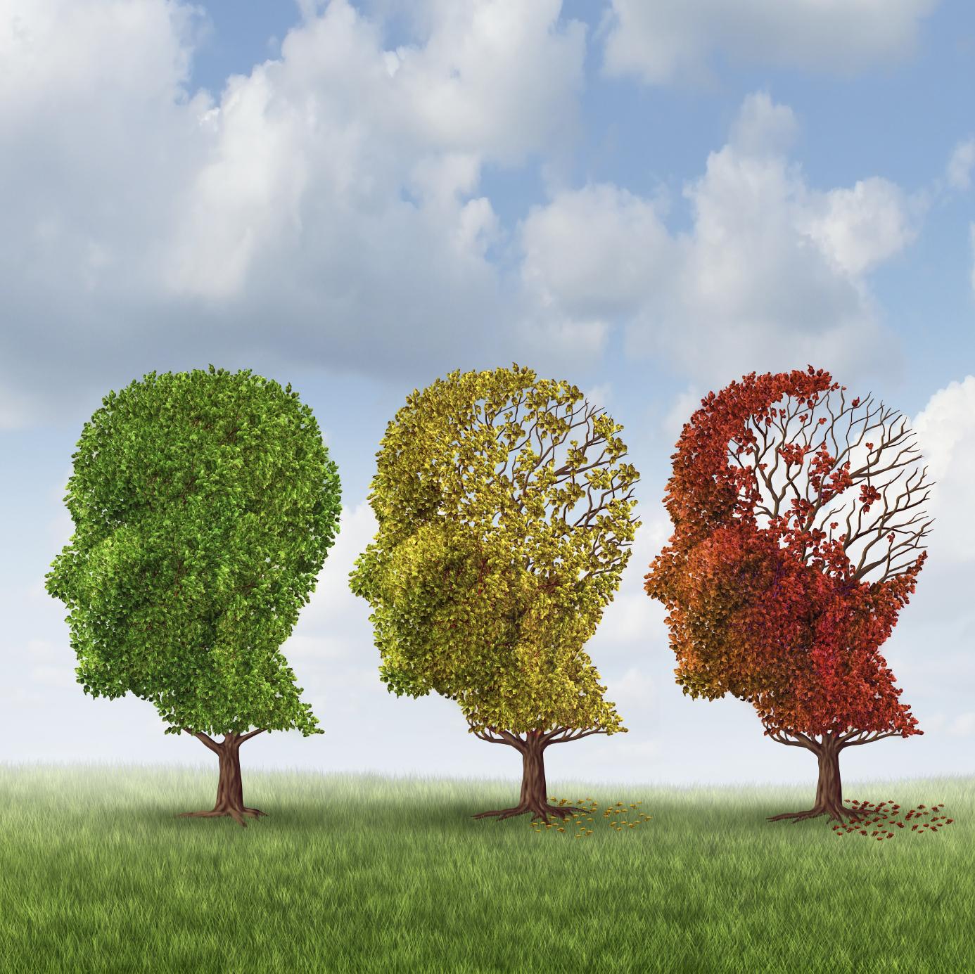 Alzheimera İyi Gelen Bitkiler